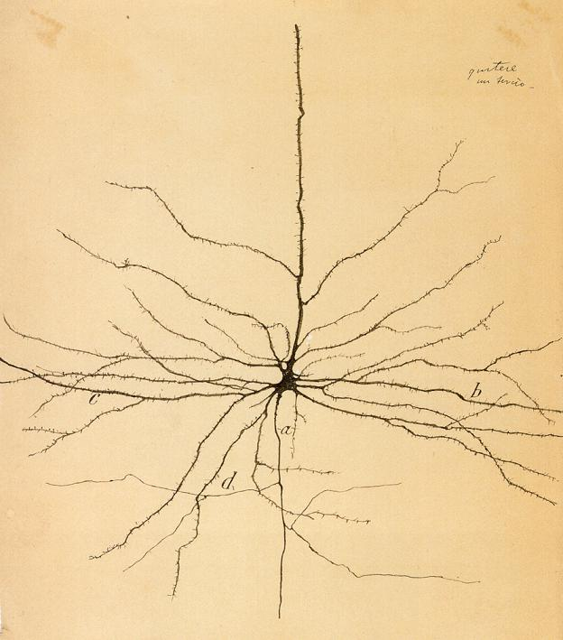 A single, pyramidal neuron. Illustration by Ramon Y Cajal S., ca. 1899.