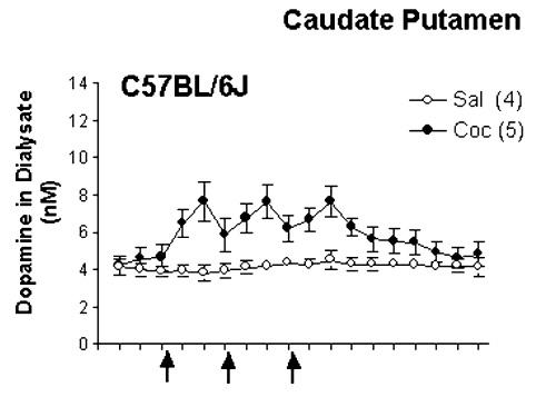 Cocaine-induced increase in DA. (Zhang Y et al. Brain Res. 2001.)