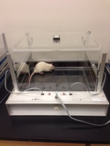 Locomotor Activity Test Chamber with a mouse. Image from UC-Davis Mind Institute (http://www.ucdmc.ucdavis.edu/mindinstitute/).