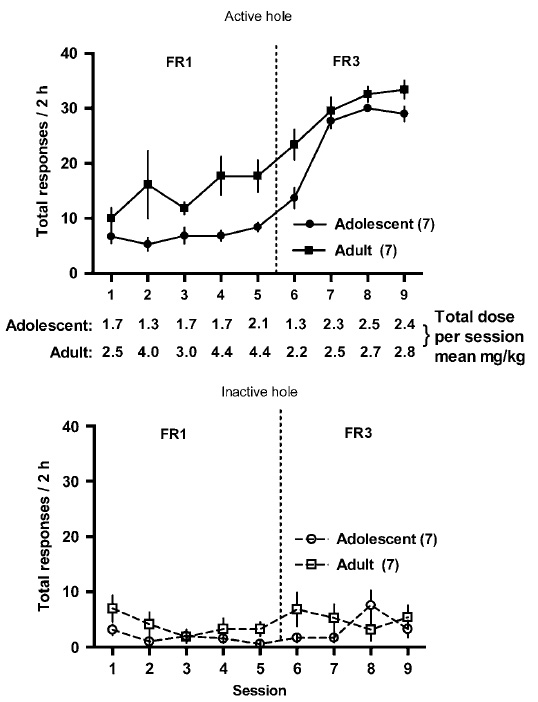 Oxycodone self-administration by adult and adolescent mice. (Zhang Y et al. Neuropsychopharmacol. 2009.)