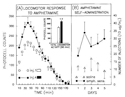 Figure 1: Behavioral sensitization to amphetamine. Locomotor activity test (left panel) and self-administration (right panel).