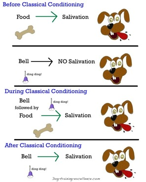 Figure 1: Classical Conditioning (http://www.dog-training-excellence.com/classical-conditioning.html)