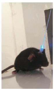 Optogenetics1